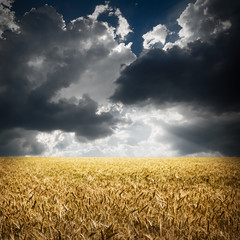 field with dramatic sky