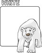 Color White and Polar Bear Cartoon
