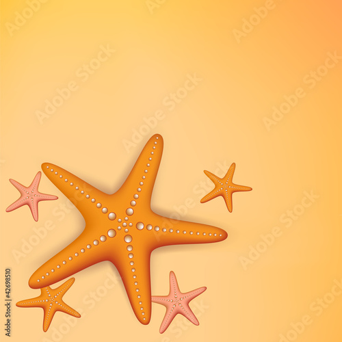 collection of starfish
