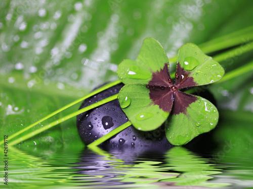 Fototapeten,fröhlichkeit,grün,kleeblatt,gesundheit