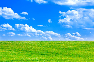Wheat field and cloudy blue sky