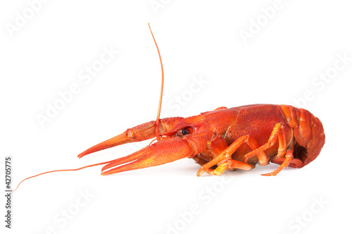 One boiled crawfish