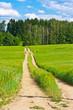 Barleycorn field and road