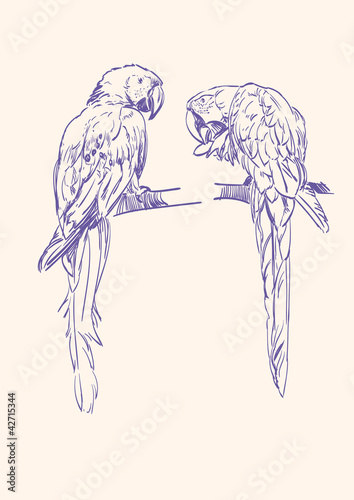 Parrot  vector llustration