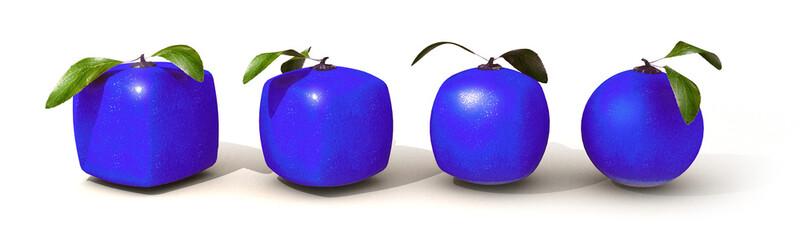 Blue citric fruit evolution