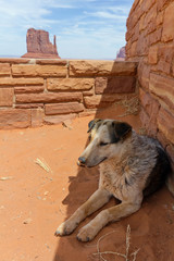 Stray dog in Monument Valley