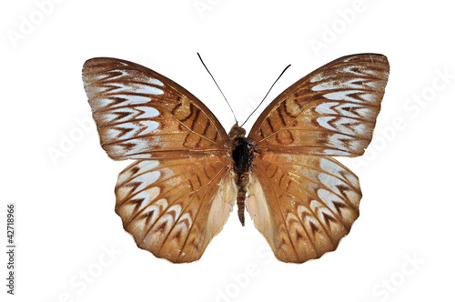 Brown butterfly isolated on white background