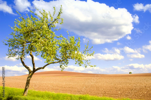 apple tree and fields