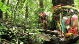 Auspicious Sacred Tree In The Jungle Of Thailand