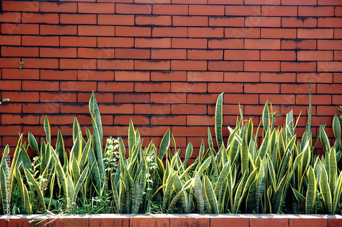 brick wall with ornamental plants