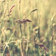 Summer Meadow (Image with texture)