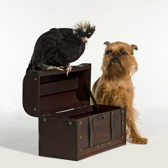 Old treasure chest with pirate bird and dog