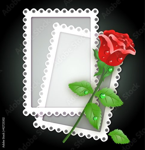 White frame and rose