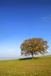 Single tree on the hill against blue sky