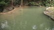Fish Swimming In Clear Pond In Thailand