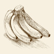 Sketches of a banana