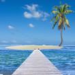 îlot cocotier