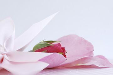 Rose rosarot