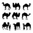 Camels Silhouettes detailed