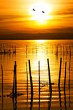 Fototapeta słońce - verano - Jezioro / Staw