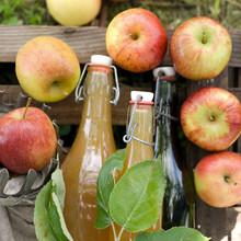 Tiempo de cosecha, jugo de manzana