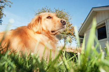 Dog keeping watch