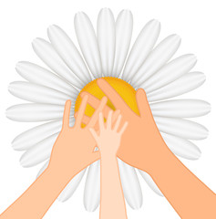 Family -Vector illustration of hands on chamomile background
