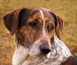 Gray and brown mixed breed dog portrait