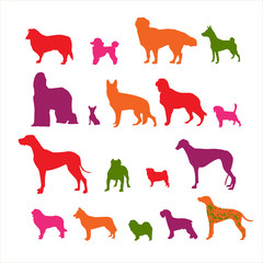 Colorful isolate dog vector