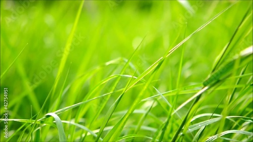 Green grass swaying in the wind.