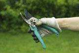 Secateurs in the hand