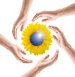 Sonnenblume mit Sonnenkollektor und Händen