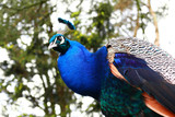 Fototapeta niebieski - zielony - Ptak
