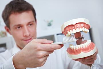 Zahnarzt hält Gebissmodell und Zahnbürste