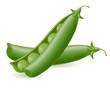 peas vector illustration