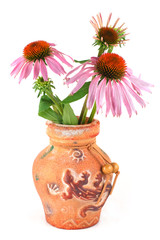 A bouquet of flowers of Echinacea purpurea in a clay vase