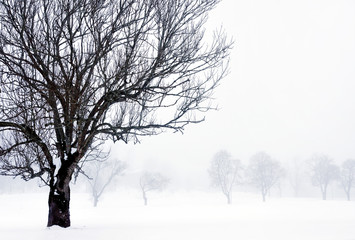 foggy winter landscape