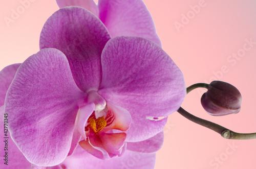 Fototapeten,hell,dekoration,blume,leaf