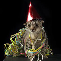 chat tabby brun en carnaval