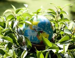 globe terrestre nid d'oiseau plante verte