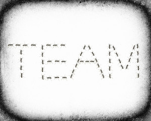 ants assembled to spell the word Team