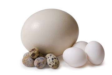 Egg of the ostrich, hens, femail quails