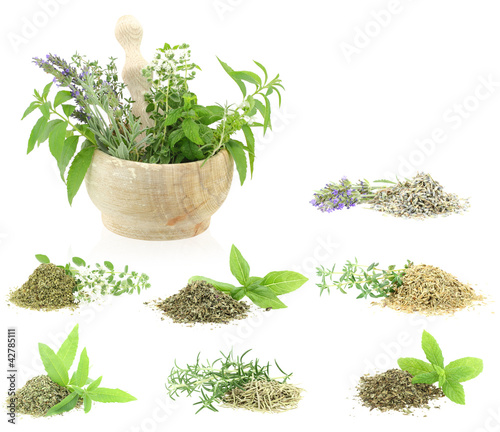 Herbs and spices collection