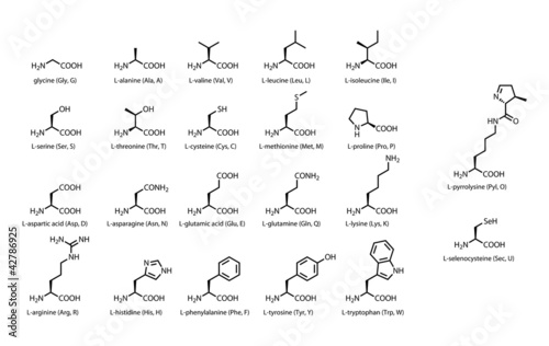 The 22 standard amino acids - chemical structures