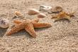 Seesterne und Muscheln am Strand