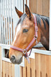 A portrait of brown horse in barn