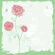 red rose background card