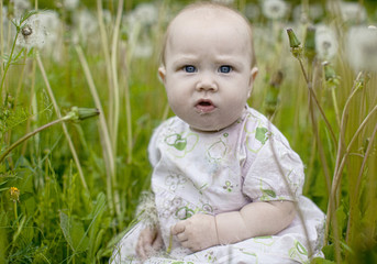 A small child in the dandelions