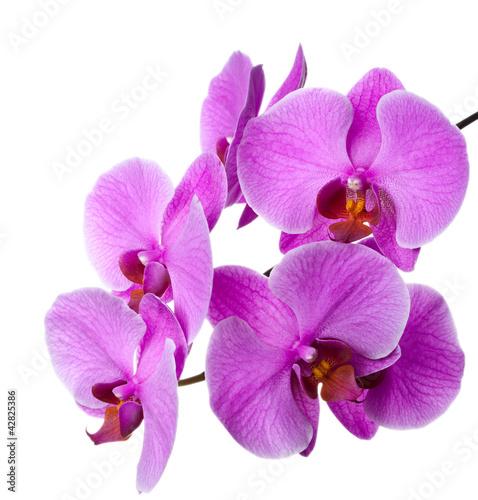 Fototapeten,orchidee,blume,schön,schönheit