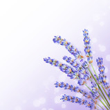 Fresh lavender flowers border